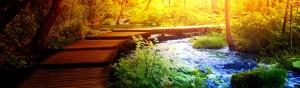 counseling psicologia spirituale udine