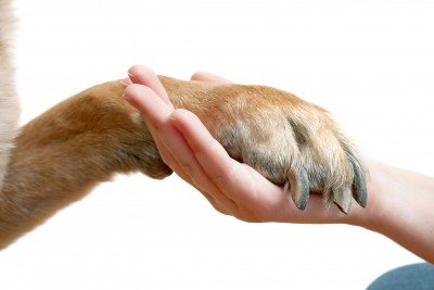 pets-helping-hand